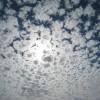 Cloud-Trends 2015: Enterprise Services und Datendienste sind gefragt